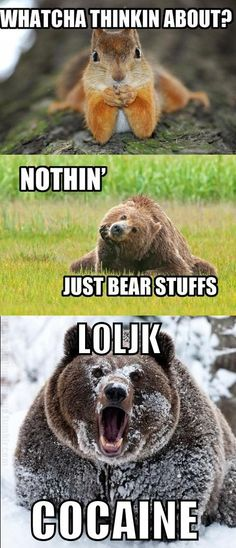 just bear stuffs.