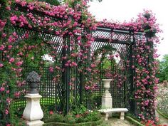 beautiful trellis