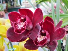 New Zealand WOW!: [B37] Orchids