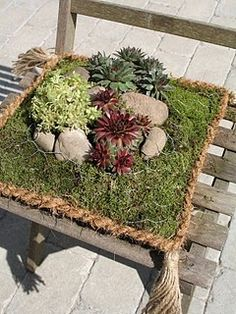 succulent pillow from chicken wire, rope and moss Slate Garden, Garden Oasis, Garden Art, Dish Garden, Garden Terrarium, Succulents Garden, Planting Flowers, Container Plants, Container Gardening