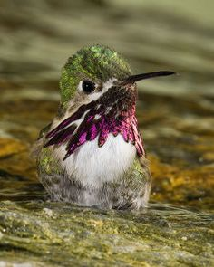 baby Humminbird ntaking a shower