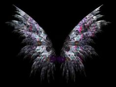 Synesthesia: Your wings are ready....