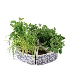 Take a look at this Blue Ceramic Herb Garden  by Fallen Fruits on #zulily today!