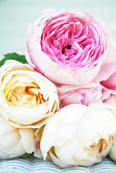 A Country Farmhouse: English Roses - David Austin Glamis Castle (cream) and Heritage (pink)
