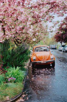 Blossom rain