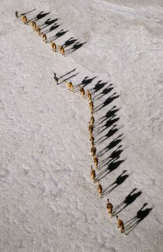 Africa | An Afar camel caravan crossing the salt flats of Lake Assal, as shadows lengthen in the late afternoon. At 509 feet below sea level, Lake Assal, Djibouti,  is the lowest place in Africa. | Photographer Nigel Pavitt, © John Warburton-Lee