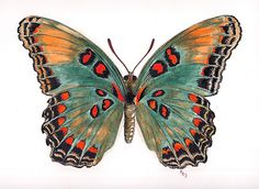 Limenitis astyanax, the Red-spotted Purple by Pete Janes drawing butterfly 'Limenitis astyanax, the Red-spotted Purple' by Pete Janes Butterfly Drawing, Butterfly Painting, Butterfly Watercolor, Watercolor Art, Bird Wings, Butterfly Wings, Butterfly Colors, Vintage Butterfly, Tattoo Minimaliste