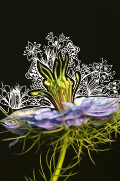 Nigelle de Damas Photangle - By Alycia Rowe