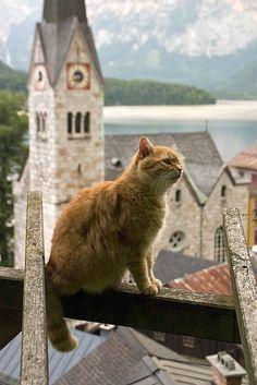 猫と風景の画像 01|ねこLatte+