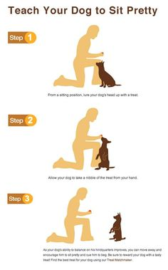 Dog Obedience Training: Need to train your dog! Check out this great Dog Training site – dogtraining-cxq… – Sam ma Dog Training Puppy Training Tips, Training Your Dog, Training Collar, Agility Training, Potty Training, Crate Training, Leash Training, Obedience Training For Dogs, Training Kit