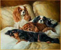This may be the very picture of cavaliers I have ever seen
