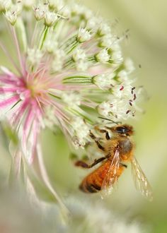 Beautiful Honey Bee Love Moments | photo pinned by Western Sage and KB Honey (aka Kidd Bros)