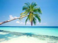 Playa del Carmen_Esta hermosa fotografía de playas paradisiacas fue tomada en México, en la península de Yucatán. Es un lugar de atracción para muchos vacacionistas sofisticados. Gracias a su popularidad entre los europeos, es conocida como la playa más cosmopolita de Quintana-Roo.
