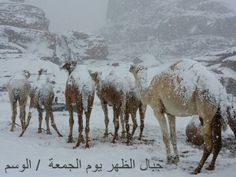 Snow in Middle East - Imgur, Egypt