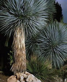 Jaap Scheeren (Photography) - Palm trees in Hyeres