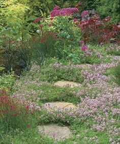 Creeping thymes provide fragrance underfoot. Many cultivars are tough enough to withstand occasional foot traffic along garden paths.