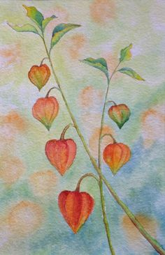 Chinese Lanterns ~by Jill Griffin