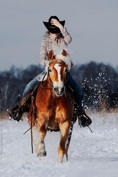 A ride through the snow. I love to ride horses in the snow