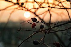 Gondolj már most a hideg téli estékre, és az ajándékozásra. Marvel, Fruit