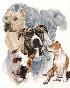 american staffordshire terrier-such a loving, loyal and misunderstood breed