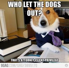 Hilarious Lawyer Dog Memes You Need to See Attorney-Client privilage.