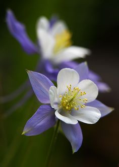 ~~Two Of Them | Columbines by AnyMotion~~