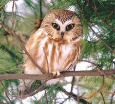 owls pictures - Bing Images