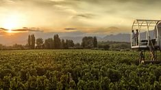 Who would you like to be with in this beautiful vineyard in Mendoza, Argentina? Mendoza, Underwater Hotel, Unusual Hotels, Jacuzzi Outdoor, Vacation Spots, South America, Vineyard, Beautiful Places, National Parks