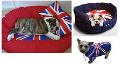Union Jack beds for dogs, and other Union Jack furnishings. VERY cool!