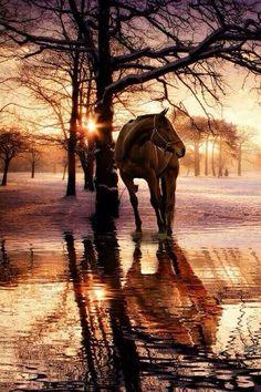 Cheval marais couché soleil