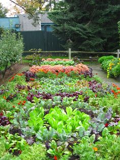 Vegetable Gardening - a Hobby for Everyone. //whatwomenloves ... on rock gardens landscaping designs, kitchen floor plans and layouts, rock garden plans and designs, raised garden plans and designs, rose garden plans and designs, edible garden ideas and designs, kitchen remodeling floor plans, shade garden plans and designs, raised bed vegetable garden fence designs, custom home kitchen designs, landscape for shade rock garden designs, cottage garden plans and designs,