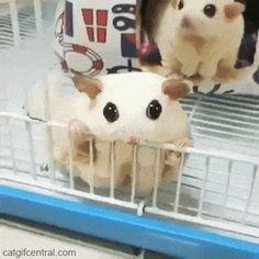Sugar Glider Cutie Pies