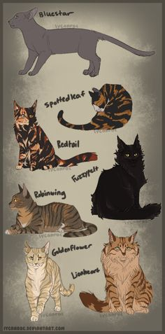 WarriorsRewrittenis a project betweenAnnMY,tori-oisloveand myselfthat aims to fill plot holes, fix inconsistencies, and apply proper feline genetics to the random spar...