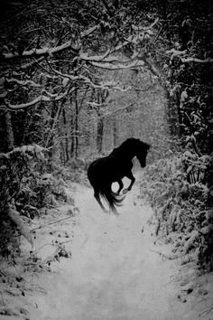 Black horse on a white night