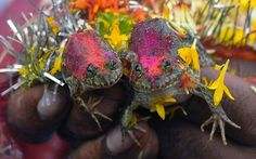 A Frog Marriage or a Plea for Rain? Farmers in Nagpur, India staged a marriage between two frogs. The traditional marriage is meant to satisfy the rain gods. The region of India where Nagpur is located was experiencing some drought conditions due to the lack of monsoon rains that typically quench the region during this time of year.
