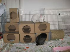 How to Make Cardboard Rabbit Tunnels House Rabbit, Pet Rabbit, Hamsters, Rodents, Diy Rodent Toys, Rabbit Tunnel, Cardboard Cat House, Bunny Crafts, Rabbits