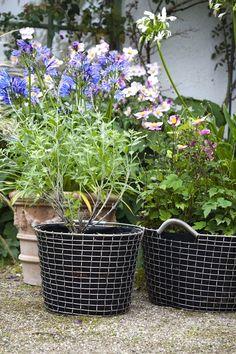 Flowers in wire baskets