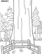 Canada Coloring Page See More Sequoia National Park