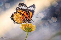 Butterfly by Fabrice Kurz on 500px