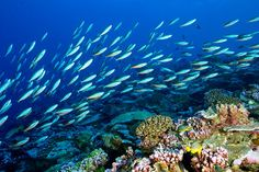 An Island a Focal Point for a Healthy Marine Ecosystem