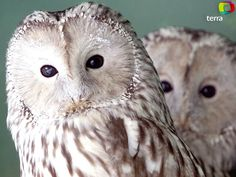 O TEMPO VIDA: Aves de rapina