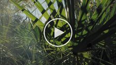 The morning sun shining brightly through the foliage in a Florida forest. #palmetto #florida #sunlight