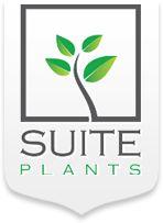 Suite Plants