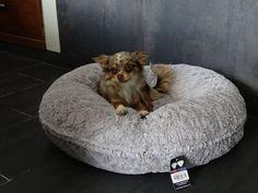 Bagels Rlijk Ontwerp Golden Retrievers Meubelontwerp Pet Design Furniture Bessie And Barnie