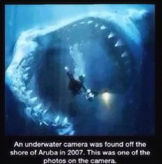 #Creepy Pasta #Shark #Scuba Diver