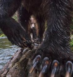 Bear Pictures, Artwork Pictures, Precious Book, Brother Bear, Bear Claws, Dere, Photo Caption, Animales, Bears