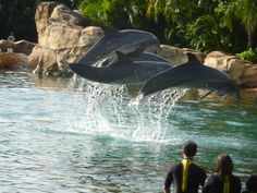 Discovery Cove swimming with the dolphins. Absolutely love this place :)