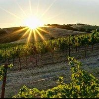 The sun is rising at Calcareous Vineyards in Paso Robles.