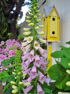 Beautiful foxglove and love the yellow birdhouse!