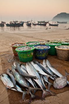 Ngapali Beach - Myanmar - The morning catch laid out on the beach.